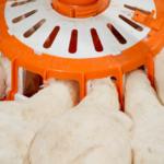 Breeder Pullet Feeding Tube