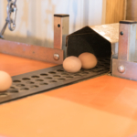 egg-belt-2