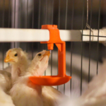 UniVENT Poultry Cage Systems