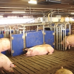 HydroMix Lactating Sows