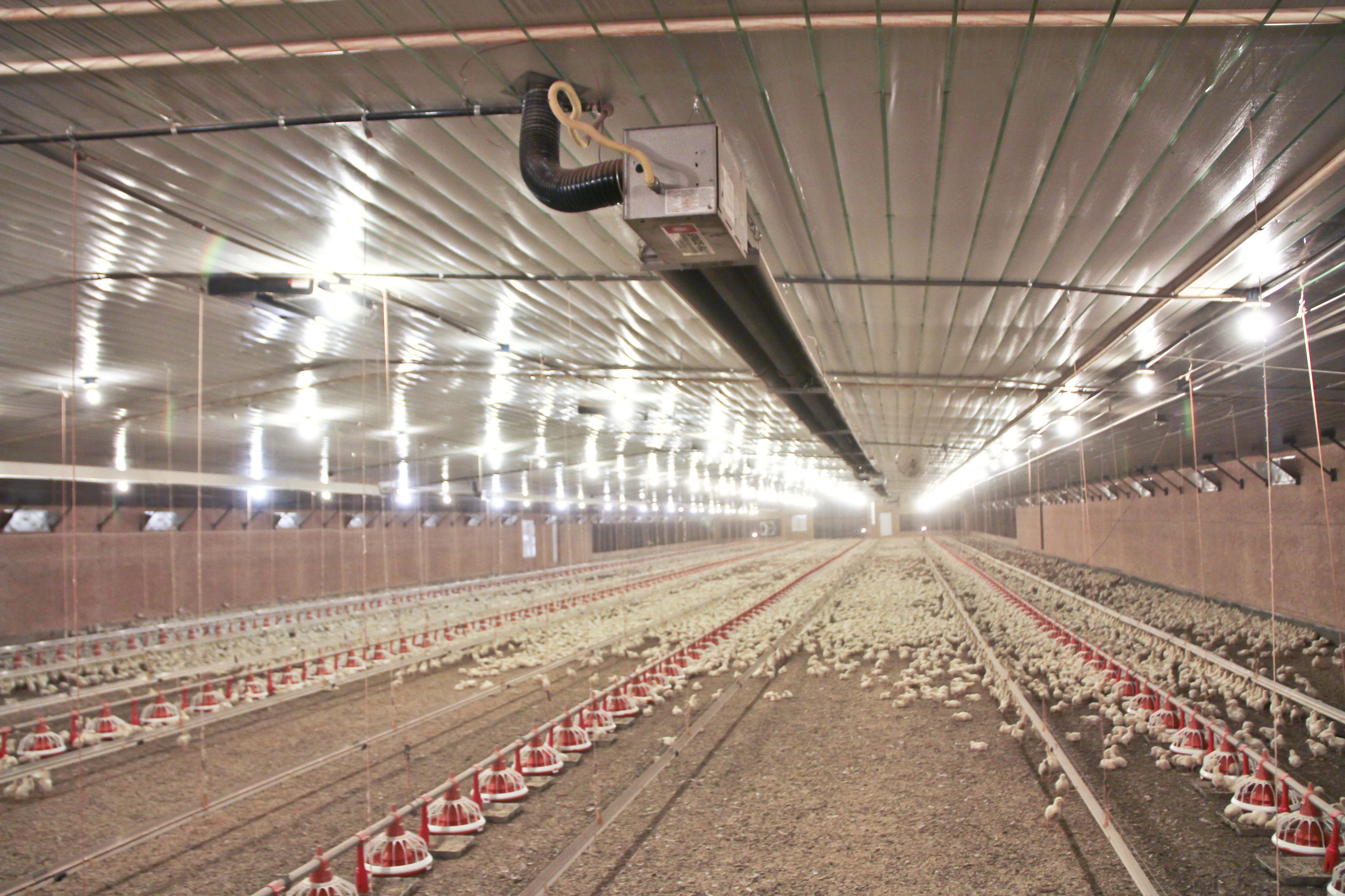 Heating Heating Systems Poultry House Brooders Big