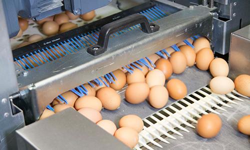 egg trax egg handling belt