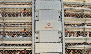 Feed cart for poultry feeding